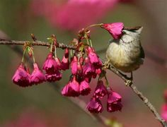 The Incredible and Beautiful Birds of Taiwan | Nature - BabaMail