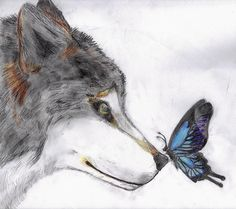 The butterfly and the wolf by ~Blaize955 on deviantART