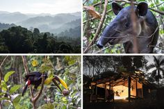In Search of 'Wild' Costa Rica - NYTimes.com