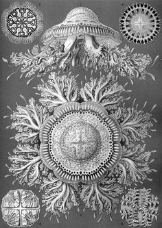 00110010001.blogspot.com: Ernst Haeckel, biólogo, persona.