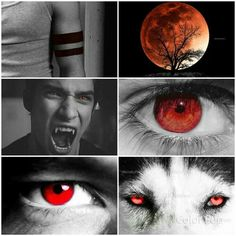 The Eyes of The Creatures Of T he night. Also Saved by Celtic 🐉 Dragon. Teen Wolf Scott, Teen Wolf Mtv, Teen Wolf Boys, Teen Wolf Dylan, Teen Wolf Stiles, Werewolf Eyes, Teen Wolf Werewolf, Teen Wolf Quotes, Teen Wolf Memes