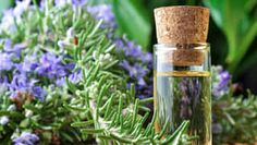 Best ways to use rosemary oil for hair growth. Top rosemary oil uses and benefits. Simple rosemary recipes for hair care. How to use rosemary oil for hair? Huile Tea Tree, Tea Tree Oil, Essential Oils For Hair, Essential Oil Uses, Pure Essential, Natural Hair Growth Treatment, Rosemary Oil For Hair, Rosemary Herb, Make Up Gesicht