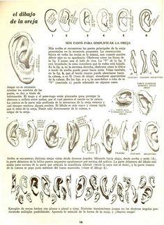 Arabic Calligraphy, Canon, Human Anatomy, Sculptures, Tutorials, Dibujo, Pintura, Libros, Cannon