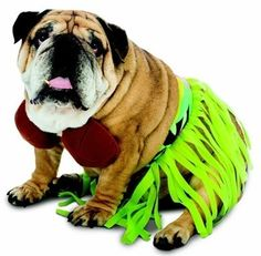 Your furry fashionista will be ready for the luau in her Zelda Hula dog costume. Get the fire ready!