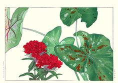 Sweet-William and caladium  by Konan Tanigami, included in Seiyo Kusabana Zufu (Picture Album of Western Flowering Plants) – Japanese picture book published in 1917