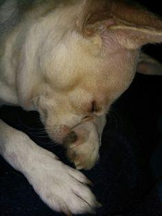 Sleepy chichi