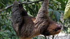 #animaux #images #oops je suis mort #paresseux