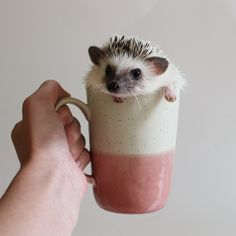 """adventuresofcalico: """"Oh no! I've been mugged! """""""