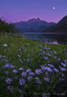 Twilight in Lavender - Vancouver Island, Canada by Thomas J Dawson Nature Aesthetic, Flower Aesthetic, Purple Aesthetic, Aesthetic Backgrounds, Aesthetic Wallpapers, Nature Wallpaper, Wallpaper Backgrounds, Pretty Landscapes, Jolie Photo