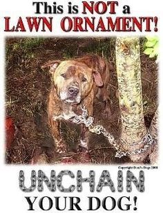 The Facts About Chaining and Tethering - Why this practice is cruel to dogs: http://www.humanesociety.org/issues/chaining_tethering/facts/chaining_tethering_facts.html         These living souls are not a door bell either!!!!!!!
