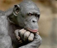 Tags: ape , thinking