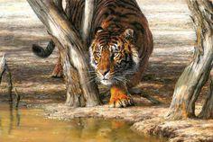 Stella Mays \ Самые слабые звери.... Обсуждение на LiveInternet - Российский Сервис Онлайн-Дневников