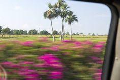 Путешествия от GoldStaff  Пинар дель Рио — самая западная провинция Кубы. «Беременные» пальмы, ром, пещеры и фрески.