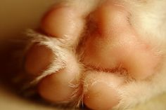 peach #paw of a #puppy