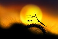 far beyond the sun by rooswandy juniawan