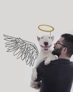 Hace tiempo que vimos en la 2 un precioso reportage sobre Rafael Mantesso y su perro. Un día Rafael se quedó sin novia y para olvidarse un poco de todo decidió crear este maravilloso proyecto con su perro Jimmy. Rafael Mantesso.