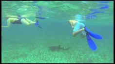 Shark Ray Alley - Get close to sharks and sting rays in their natural habitat!  Chukka.com Independence Of The Seas, Caye Caulker, Belize Travel, Sharks, Snorkeling, The Locals, Habitats, Travel Guide, Sailing