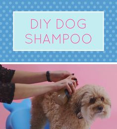 This all natural rosemary infused dog shampoo will leave your dog squeaky clean! It's an easy DIY that only takes minutes and will save you lots of money. Coconut Oil Dogs Skin, Diy Dog Shampoo, Cute Dog Pictures, Dog Teeth, Diy Stuffed Animals, Dog Training Tips, Pet Health, Dog Care, Make You Smile