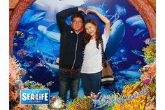 다음 중에서 나의 사진 확인하기: SEA LIFE Busan!