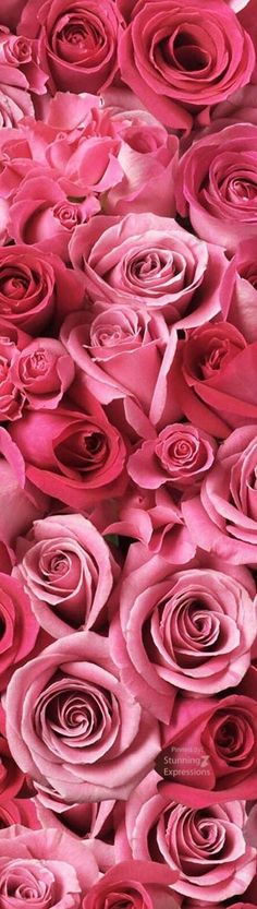 Plenty Of Pink Roses