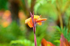 Flowerpuppet