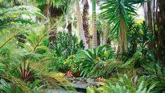 8 top plants to add tropical texture to a NZ garden    Stuff.co.nz