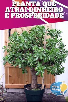 Feng Shui, Natura Plant, Good To Know, Decor, Money Plant, Indoor Flowers, Garden Pests, Jade Plants, Exotic Plants