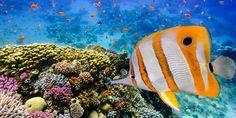 #Korallenriff im #Roten #Meer von #Marsa #Alam © shutterstock