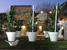 """Photo: """"Il giardino dell'Eden"""" di Piazza Garibaldi a Forte dei Marmi ..."""