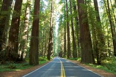 Avenue of the Giants- Northern Cali HWY 101