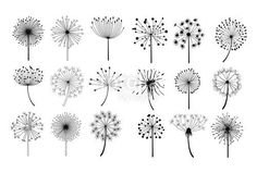 Dandelion flowers with fluffy seeds set, floral silhouettes design elements vector illustration on a white background. Dandelion Tattoo Small, Dandelion Drawing, Dandelion Tattoo Design, Dandelion Flower, Mini Tattoos, Flower Tattoos, Small Tattoos, Feather Tattoos, Tatoos
