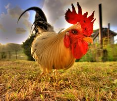 17 Wonderful Images Shot with Wide Angle Lenses Wide Angle Photography, Hdr Photography, Animal Photography, Lens For Portraits, Angles Images, Hdr Pictures, Digital Photography School, Galo, Down On The Farm