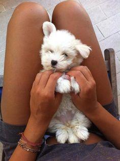 Puppy please.