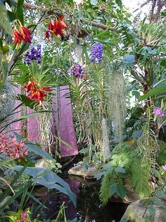 1000 images about jardines tropicales on pinterest for Au jardin tropical guadeloupe