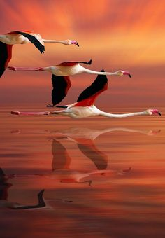 "#flamingoes at #sunset ""C'mon, guys! Doesn't this beat standing around on…"