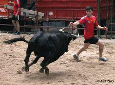 ganaderias taurinas | Publicado por Fotos Taurinas Jose Carlos Artigas en 9:24