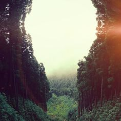 Papers.co wallpapers - mq88-mountain-mirror-green-wood-nature-flare - http://papers.co/mq88-mountain-mirror-green-wood-nature-flare/ - mountain