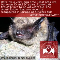 Conserving the world's bats and their ecosystems to ensure a healthy planet Bat Conservation International, All About Bats, Bat Facts, Fruit Bat, Learn Something New Everyday, Cute Bat, Creatures Of The Night, Nature Study, Halloween Bats