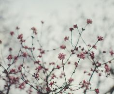 Fairycastle: Touch Of Spring. By Anne.puhlmann On Flickr.