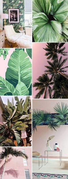 green palms and pink. / sfgirlbybay