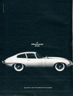 "chromjuwelen: "" 1964 Jaguar XK-E Advertisement Newsweek February 10 1964 (by SenseiAlan) "" Jaguar Suv, Jaguar E Type, Different Breeds Of Cats, Mustang, Suv Models, Great Ads, Car Advertising, My Ride, Cat Breeds"