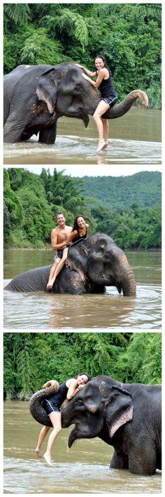 The Elephant Village in Bangkok by Necessary Indulgences. #Bangkok #Thailand #elephants