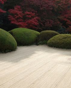 flowersgardenlove:  Japanese garden. So Beautiful gorgeous pretty flowers