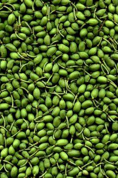 Green olives | | ♫ ♥ X ღɱɧღ ❤ ~ ♫ ♥ X ღɱɧღ ❤ ♫ ♥ X ღɱɧღ ❤ ~ Fr 19th Dec 2014