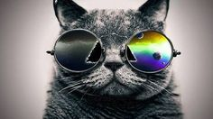 pink floyd dark side of the moon cat - Google Search