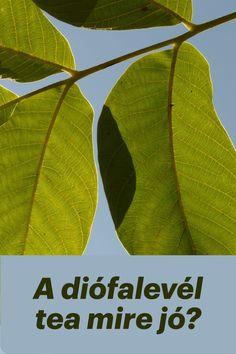 A diófalevél tea mire jó a modern kori tudomány és mire a népi felhasználás szerint? Mi a különbség és a hasonlóság? Mire figyelj, mikor használod? Tea, Plant Leaves, Plants, Modern, Trendy Tree, Plant, Teas, Planets