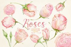 Watercolor clip art cream roses by GrafikBoutique on Creative Market