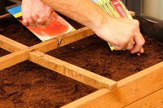 Imagen del paso Diy Y Manualidades, Vegetables Garden, Easy Crafts, Vegetable Gardening, Diy, Tutorials, Mesas, Plants