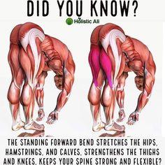 Back Exercises, Stretching Exercises, Fitness Exercises, Scoliosis Exercises, Sport Fitness, Yoga Fitness, Physical Fitness, Senior Fitness, Fitness Wear
