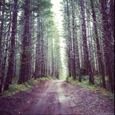 Would love to be driving down this road with my boyfriend in his chevy pickup!